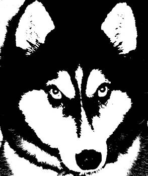 Siberian Husky by Sharon McLain