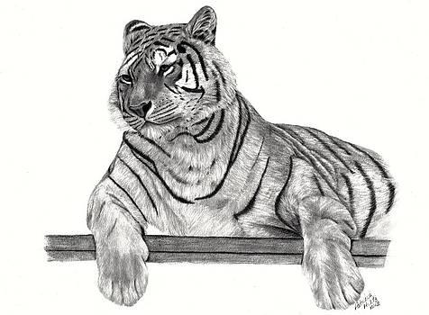Siberian Tiger by Patricia Hiltz