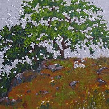 Siesta by Dorothy Jenson