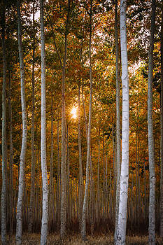Signs of Autumn by Dan Mihai