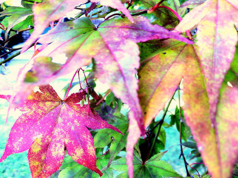 Signs of Autumn by Tanya Renee Herb