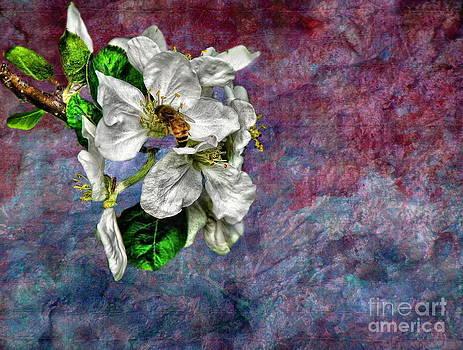 Andrea Kollo - Signs of Spring