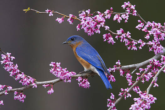 Signs of Spring by Jim E Johnson