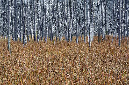 Silent Sentinels of Autumn Grasses by Bruce Gourley