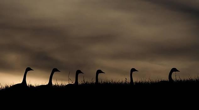 Joy Bradley - Silhouette Evening In Nebraska