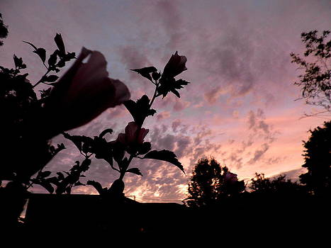 Kate Gallagher - Silhouette Of Hibiscus In Sunset