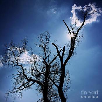 BERNARD JAUBERT - Silhouette of old tree branches against blue sky backlit