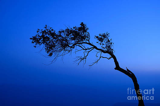 Silhouette of pine at cliff by Pornthat Pornphanrat