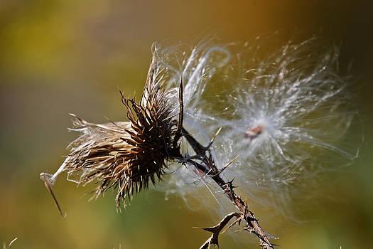 Silk And Thorns by Patricia Davis