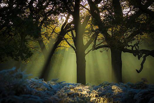 Silk - mist flowing through trees by Matthew Bruce