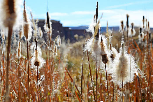 Silky Cat's Tails by Eric Nielsen