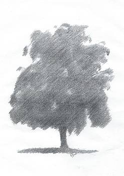 Silver Birch Drawing Number Two by Alan Daysh