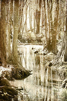 Silver Creek by Tara Richelle