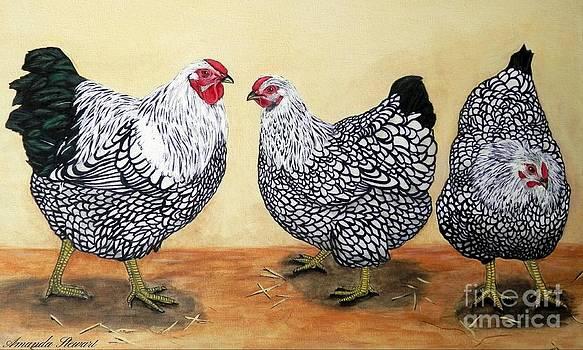 Silver Laced Wyandottes by Amanda Hukill