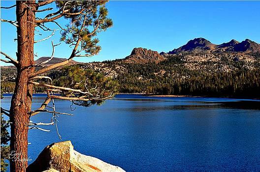Lynn Bawden - Silver Lake
