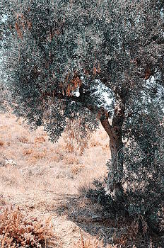 Jenny Rainbow - Silver Olive Tree. Nature in Alien Skin