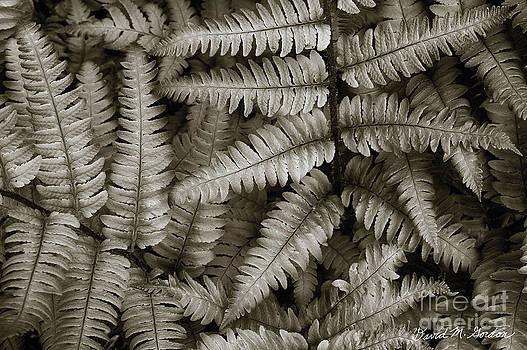 David Gordon - Silvery Ferns