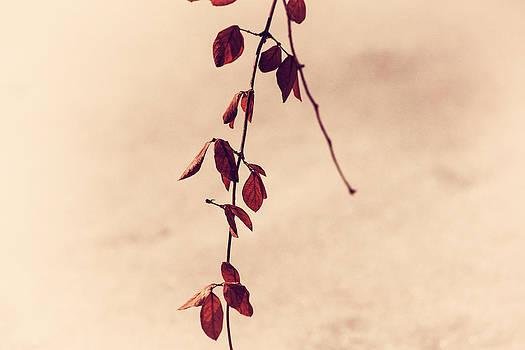Karol Livote - Simple Branch