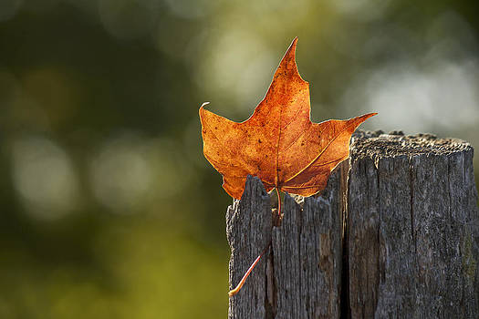 Simply Autumn by Penny Meyers