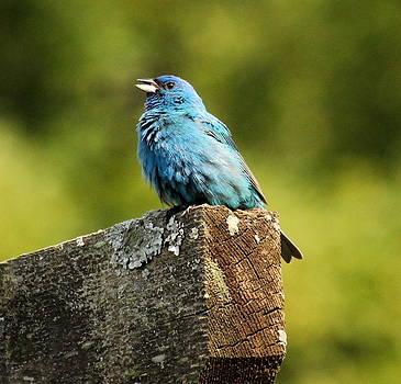 Rosanne Jordan - Sing Birdie Sing