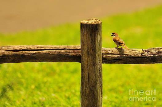 Singing Bird by George Paris