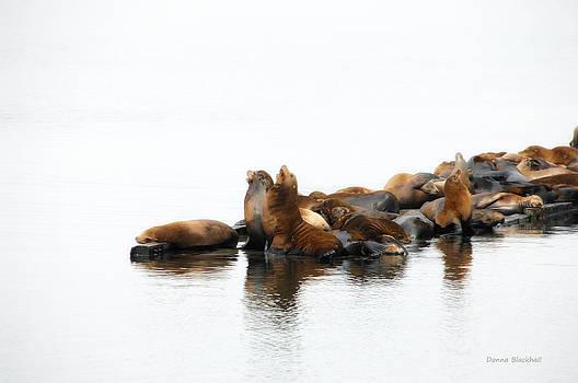Donna Blackhall - Singing Seals