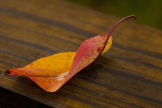 Karol  Livote - Single Leaf