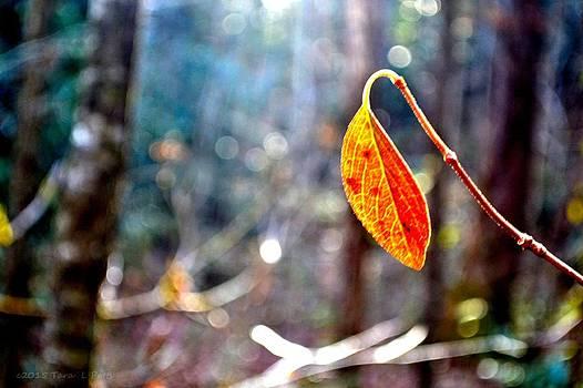 Single Leaf by Tara Potts