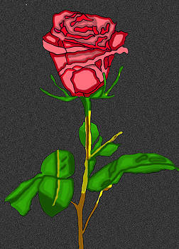 Single Red Rose by Christine Perry