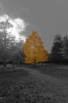 Singled out Tree by Maj Seda