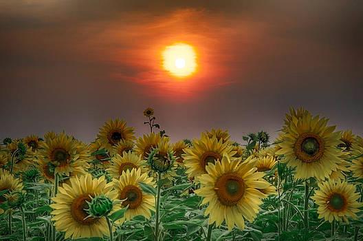 Sinister Sunflower Sunset by Christopher L Nelson