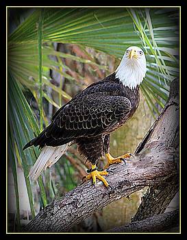 Sitting Eagle by Donald Hill