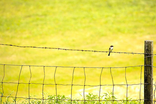 Karol  Livote - Sitting On A Wire