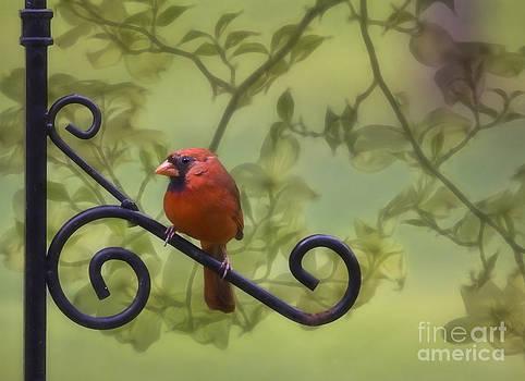 Sitting Pretty by Linda Blair
