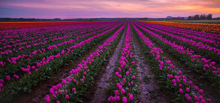 Skagit Sunset by Anthony J Wright