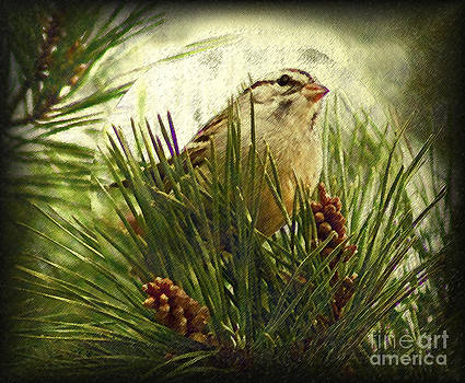 Sketchy Sparrow by Kim Pate