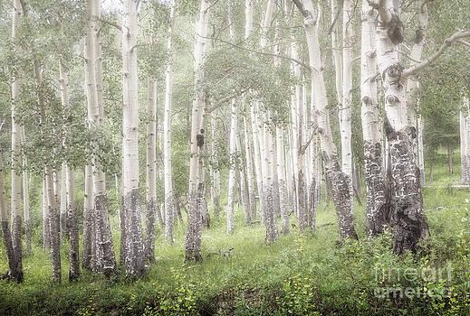 Jon Burch Photography - Skinwalkers