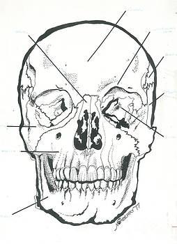 Skull Anatomy Illustration Mamallian Anatomy by Valerie Vanorden