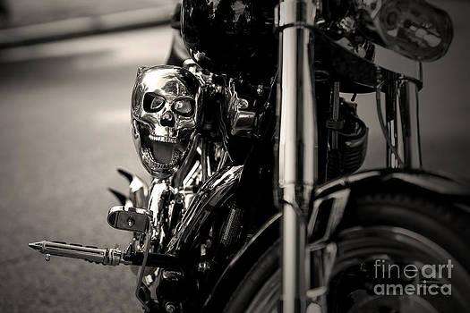 Skull by Randall  Cogle