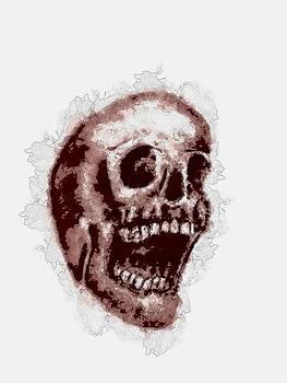 Skull Stain by Penny Ovenden