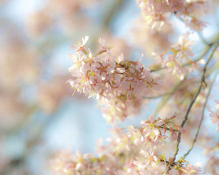 Sky and Blossom by Mary Carver