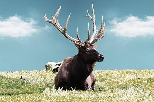 Sky Elk by Beauty Balance Design