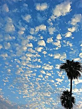 Sky by  Renee McDaniel