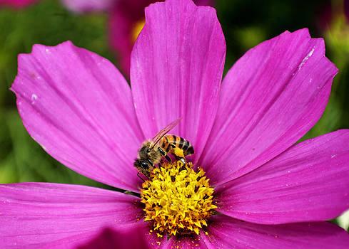Cindy Nunn - Slave to the Hive