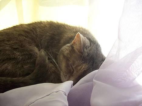 Sleeping Cat by Katie Thomas