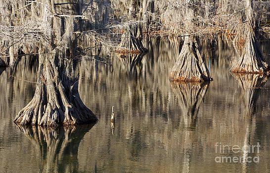 Sleeping Cypress by David Lee