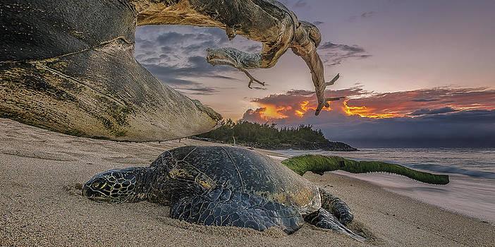 Sleeping Honu by Hawaii  Fine Art Photography