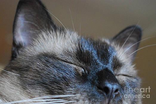 Sleeping by Liz Oliver
