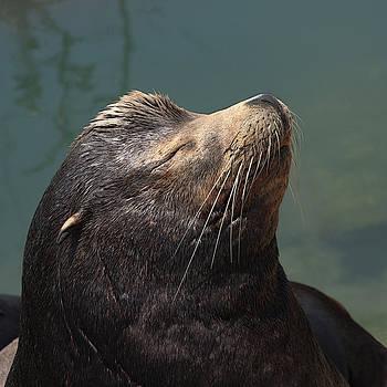 Sleeping Sea Lion by Bob and Jan Shriner