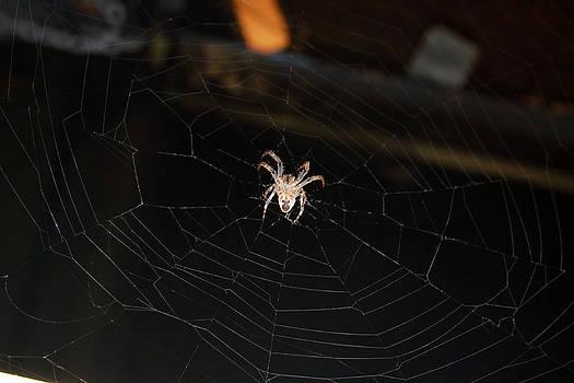 Sleeping Spider by Mo  Khalel